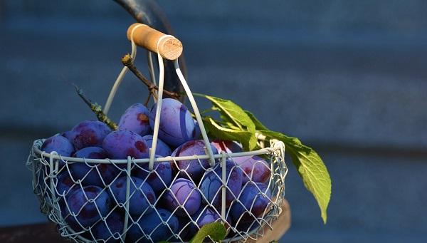 Best Summer Fruits