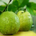 Guava – Best Summer Fruits