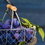 Plums – Best Summer Fruits
