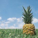 pineapple – Best Summer Fruits