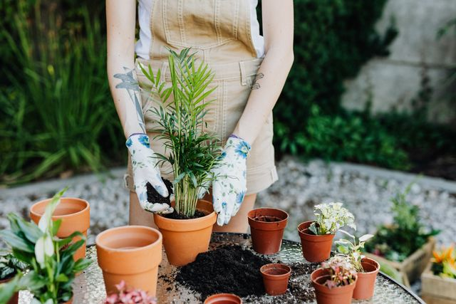 Top 5 Essentials Tools Every Home Gardner Should Own